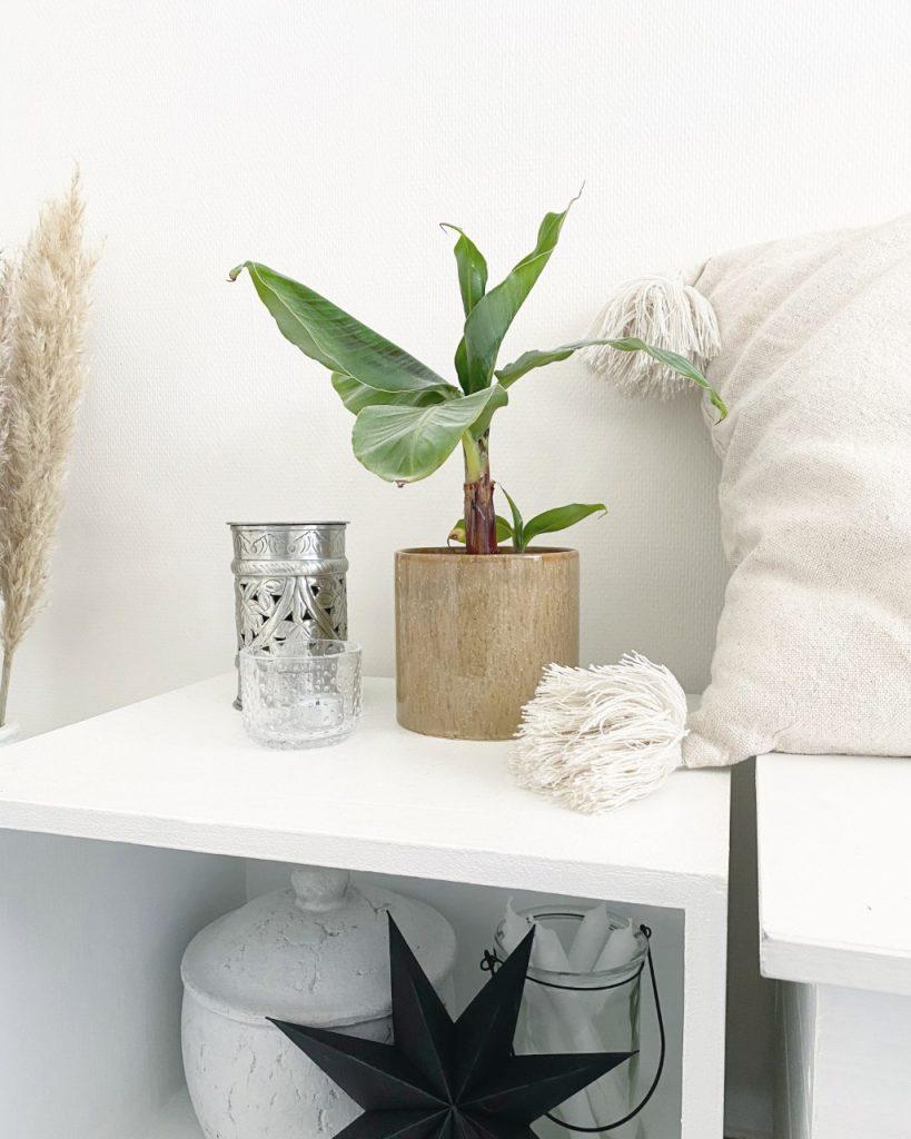 kastje-met-plant