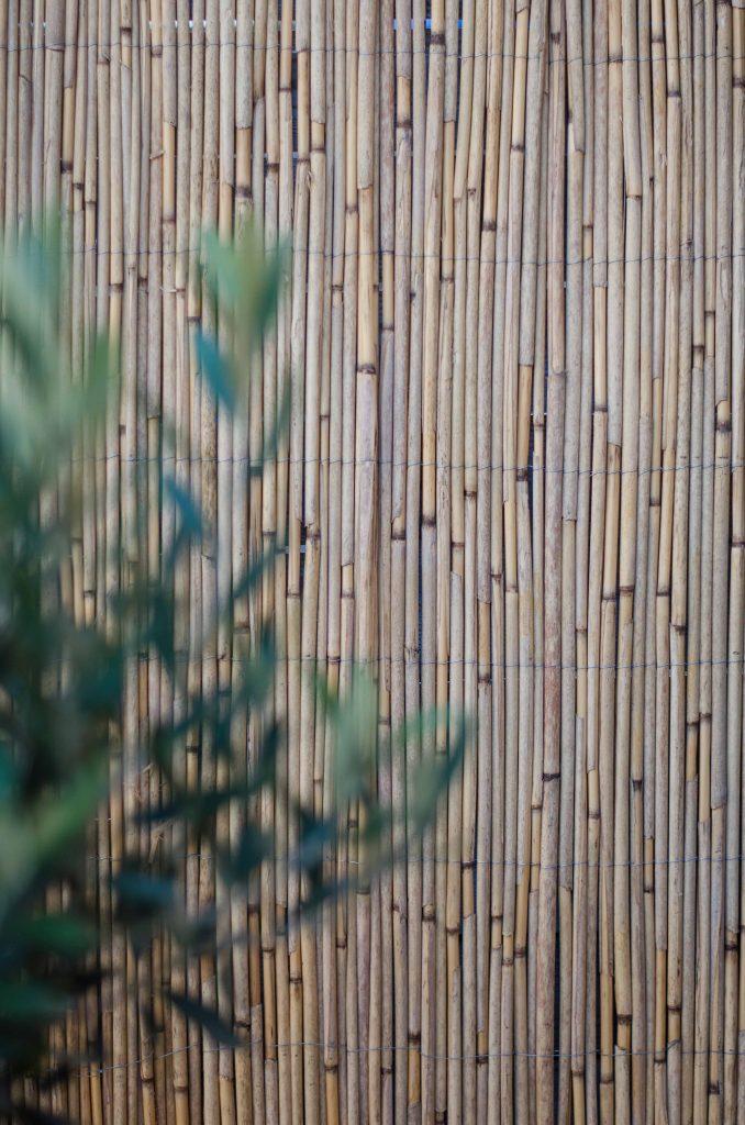 olijfboom rietmat